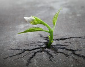 plant growing in concrete crack